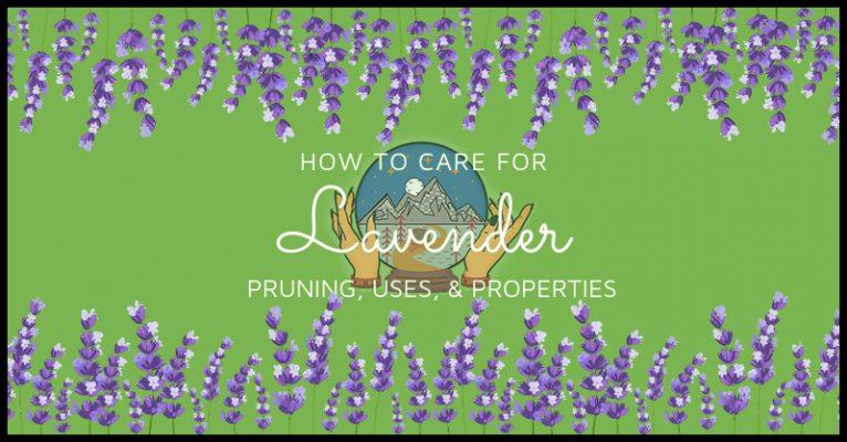 Pagan Pantry: Lavender