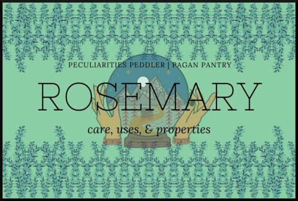 Pagan Pantry: Rosemary